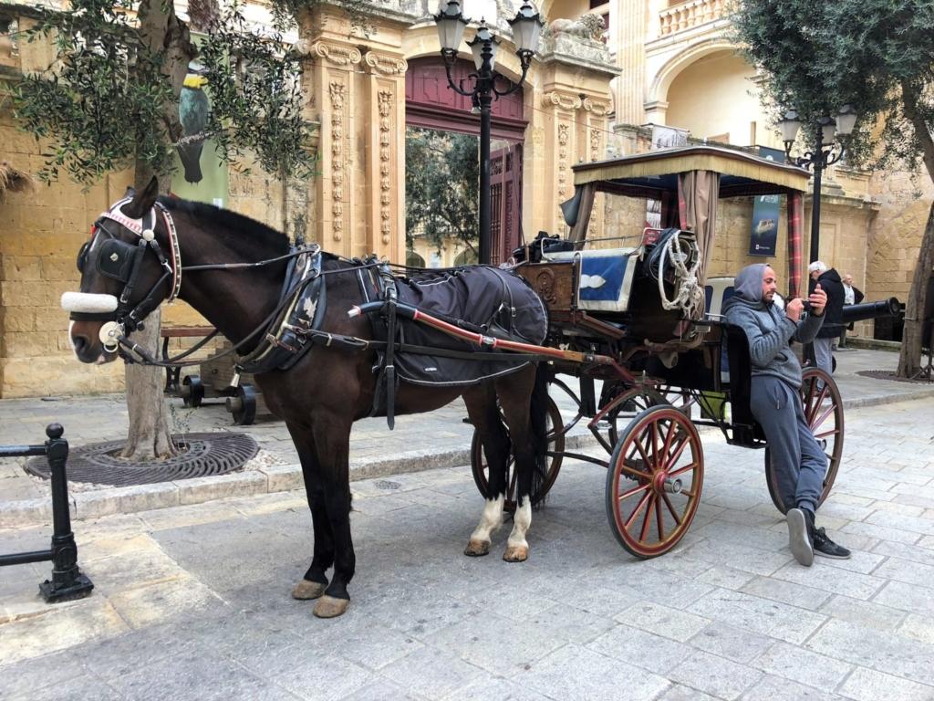 マルタ、イムディーナの観光馬車